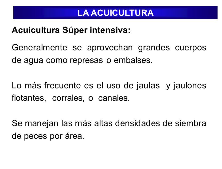 LA ACUICULTURA Acuicultura Súper intensiva: Generalmente se aprovechan grandes cuerpos de agua como represas o embalses.