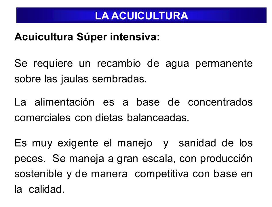LA ACUICULTURA Acuicultura Súper intensiva: Se requiere un recambio de agua permanente sobre las jaulas sembradas.