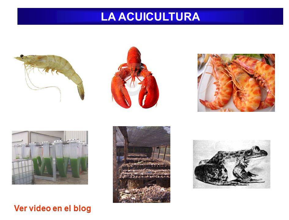 LA ACUICULTURA Ver video en el blog