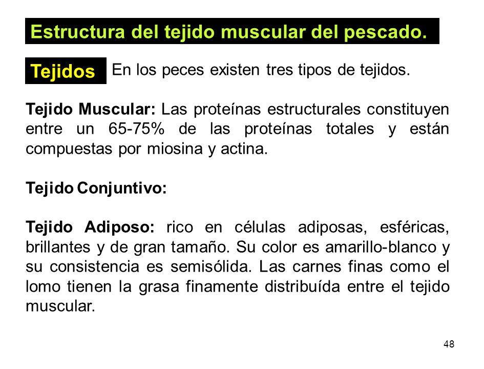 Estructura del tejido muscular del pescado.