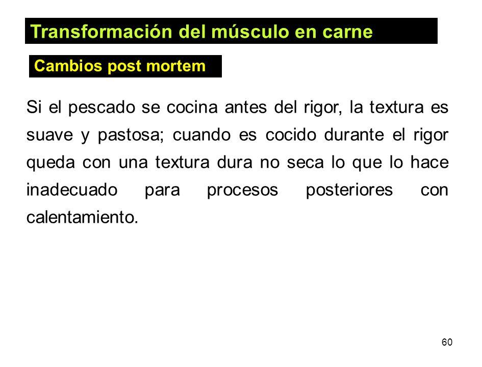 Transformación del músculo en carne