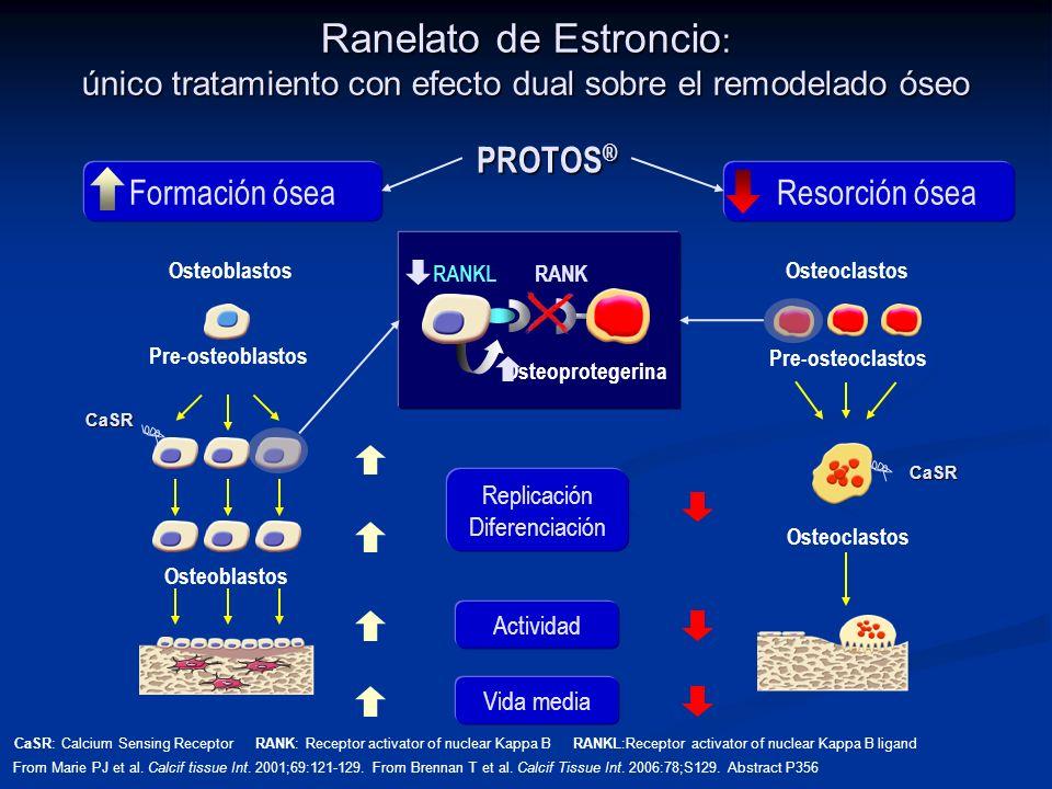 Ranelato de Estroncio: único tratamiento con efecto dual sobre el remodelado óseo