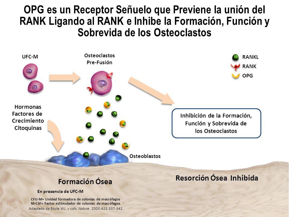 OPG es un Receptor Señuelo que Previene la unión del RANK Ligando al RANK e Inhibe la Formación, Función y Sobrevida de los Osteoclastos