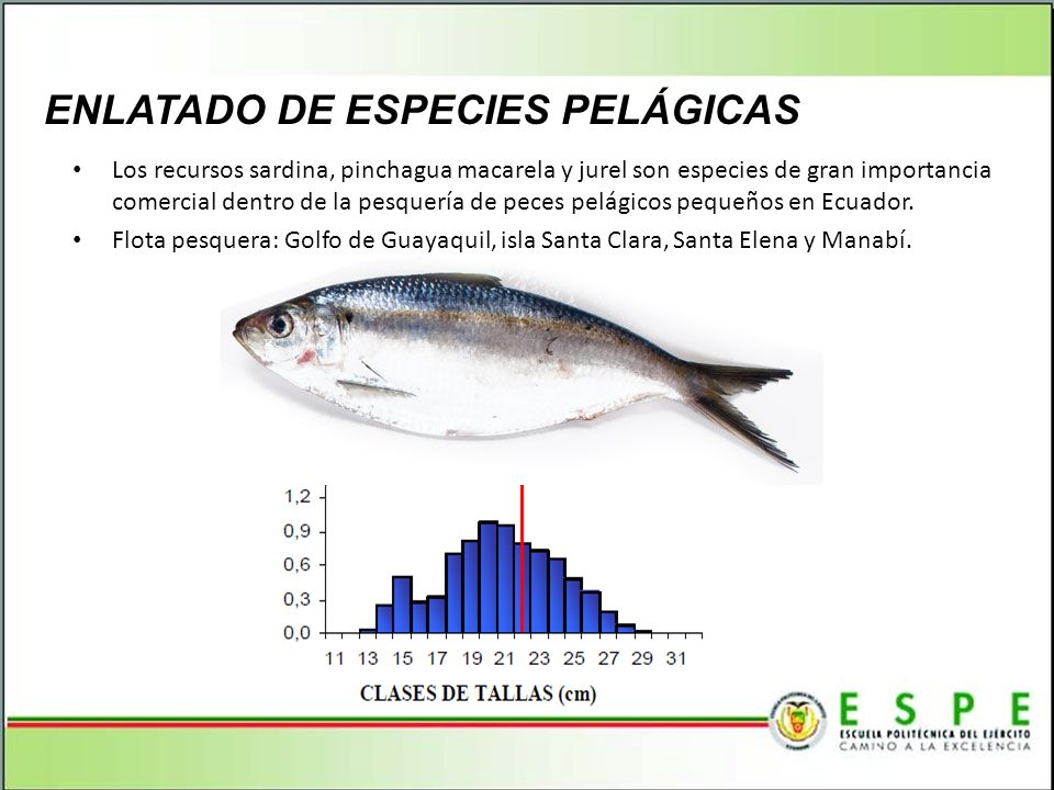 ENLATADO DE ESPECIES PELÁGICAS