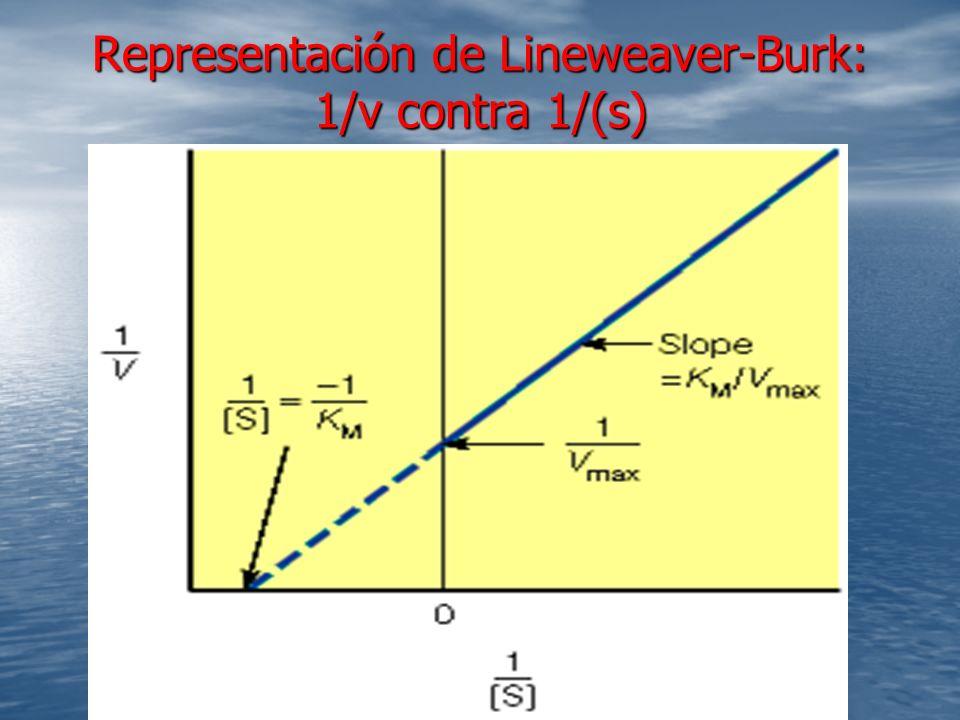 Representación de Lineweaver-Burk: 1/v contra 1/(s)
