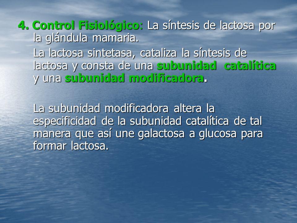 4. Control Fisiológico: La síntesis de lactosa por la glándula mamaria.