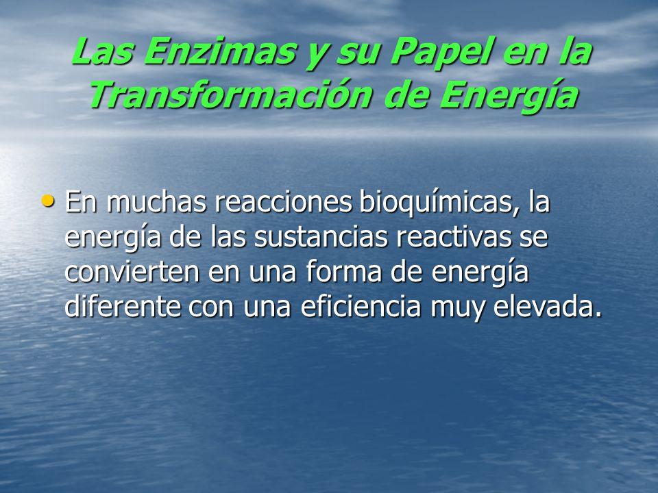 Las Enzimas y su Papel en la Transformación de Energía