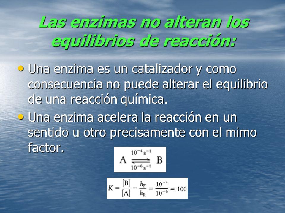 Las enzimas no alteran los equilibrios de reacción:
