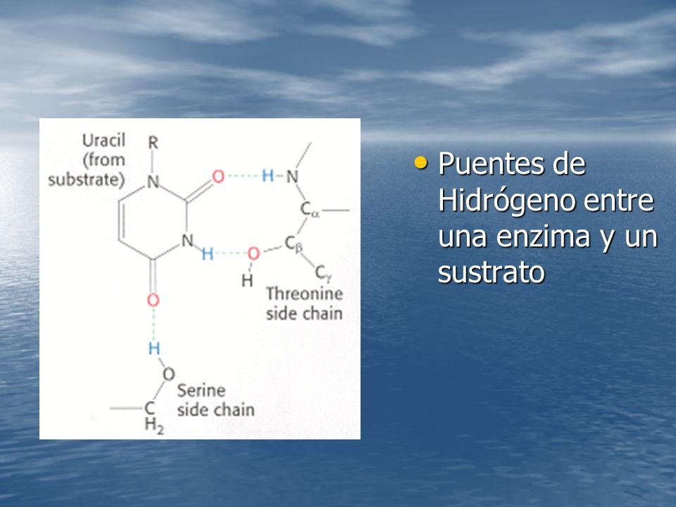 Puentes de Hidrógeno entre una enzima y un sustrato