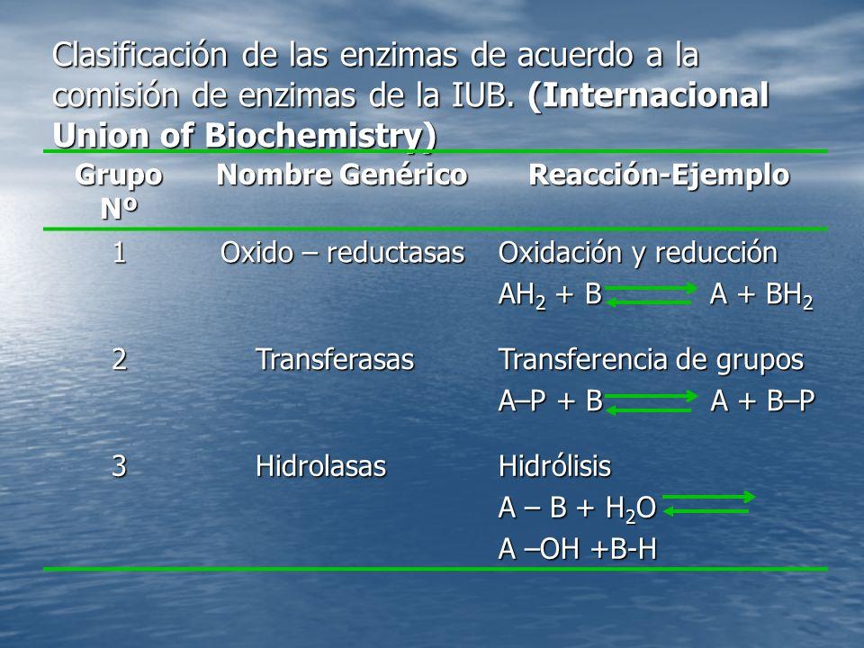 Clasificación de las enzimas de acuerdo a la comisión de enzimas de la IUB. (Internacional Union of Biochemistry)