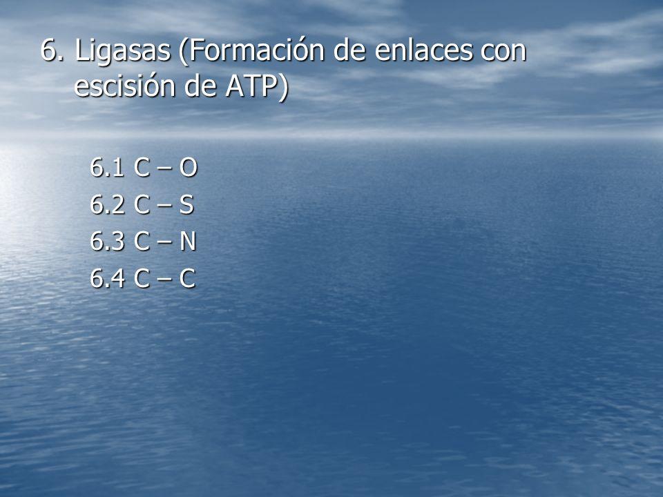 6. Ligasas (Formación de enlaces con escisión de ATP)