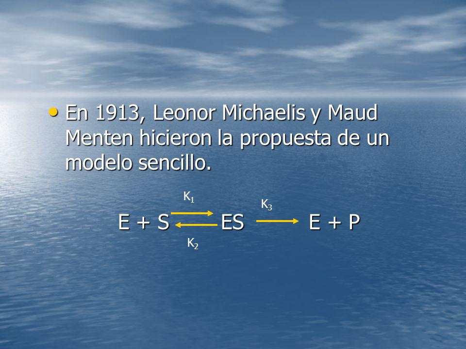 En 1913, Leonor Michaelis y Maud Menten hicieron la propuesta de un modelo sencillo.