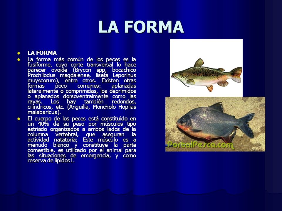 LA FORMA LA FORMA.