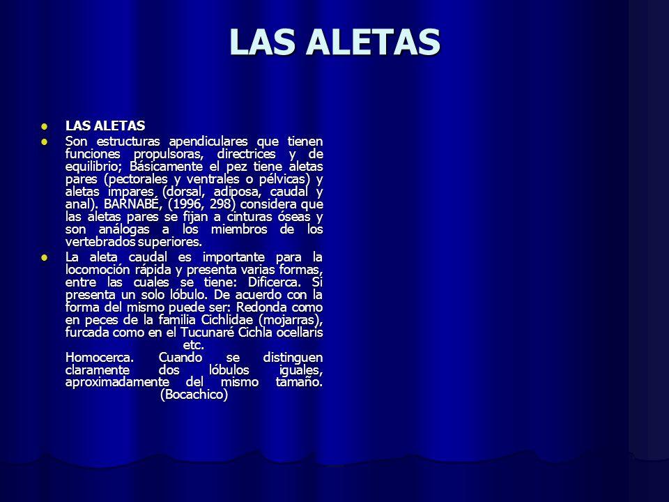 LAS ALETAS LAS ALETAS.