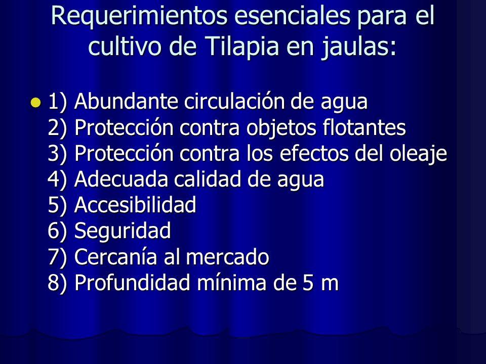 Requerimientos esenciales para el cultivo de Tilapia en jaulas: