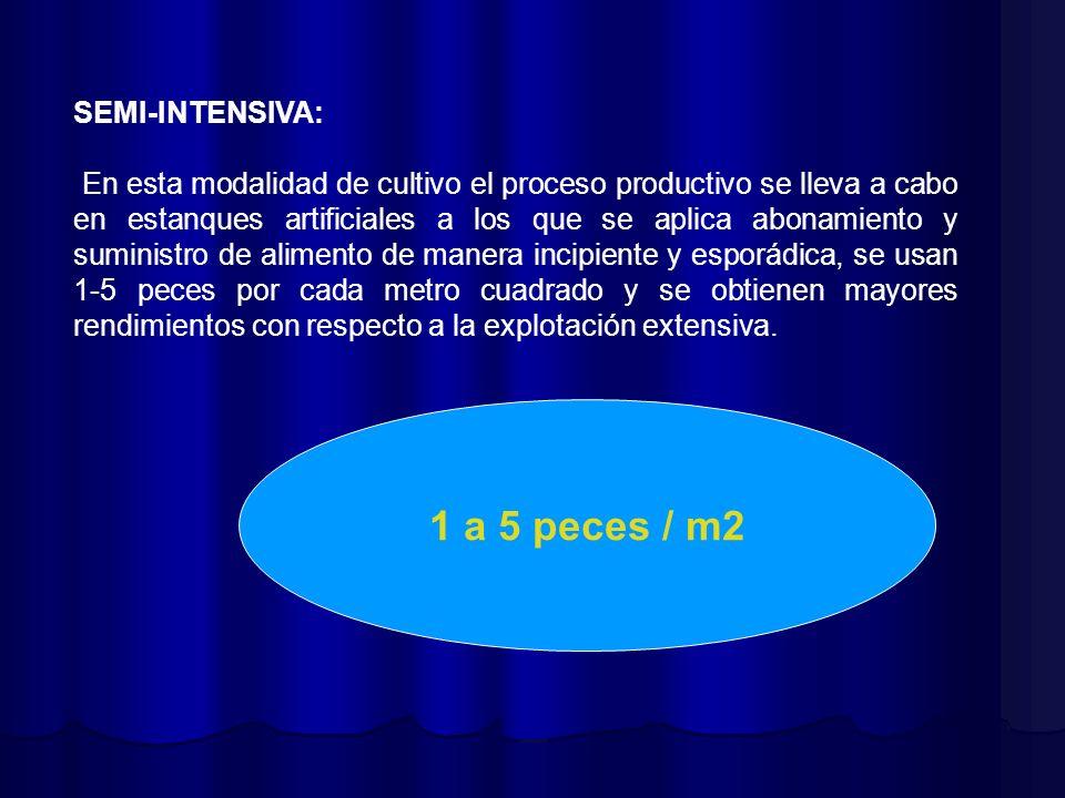 1 a 5 peces / m2 SEMI-INTENSIVA:
