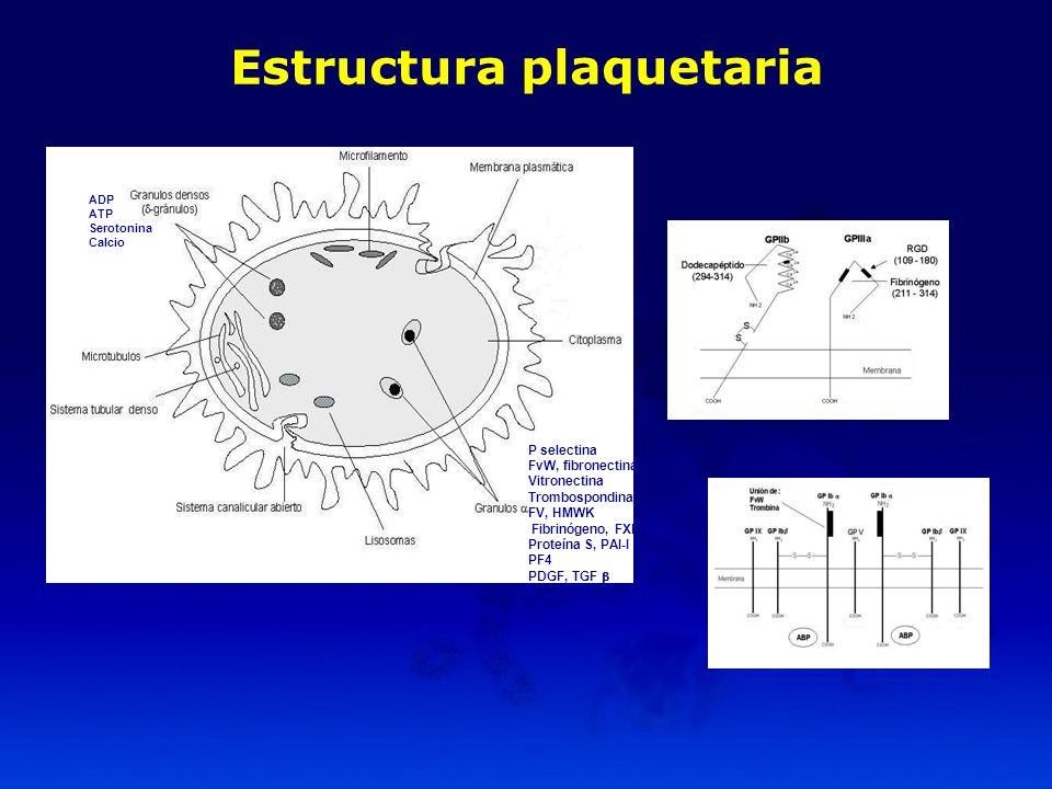 Estructura plaquetaria