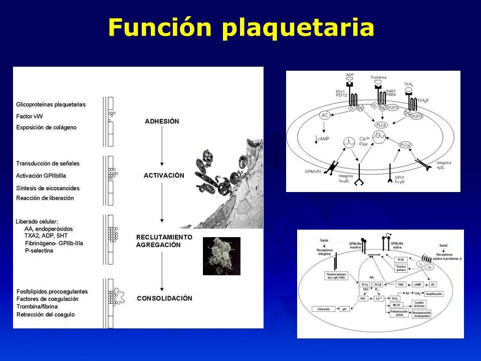 Función plaquetaria