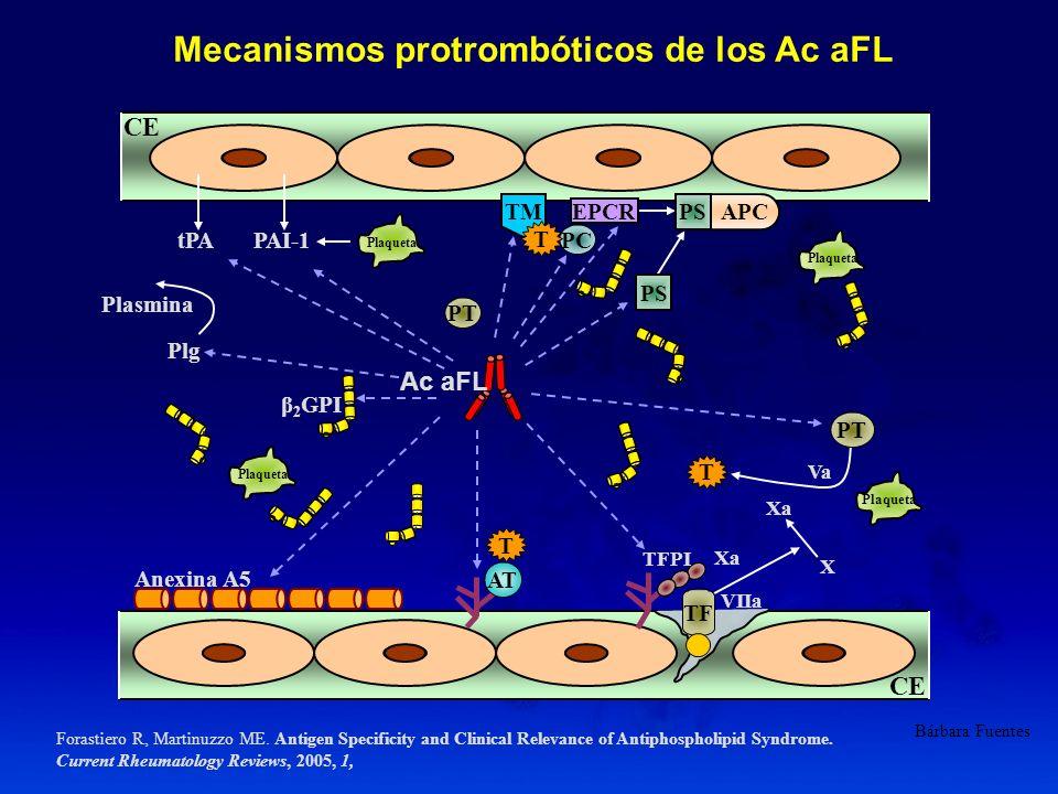 Mecanismos protrombóticos de los Ac aFL