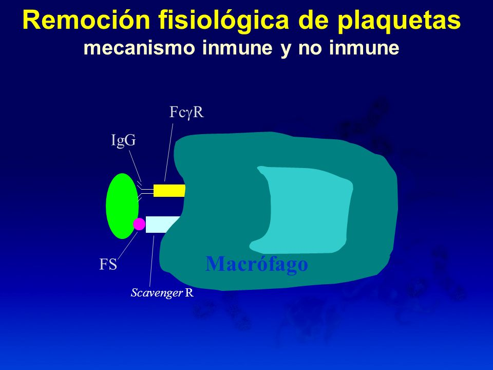Remoción fisiológica de plaquetas mecanismo inmune y no inmune