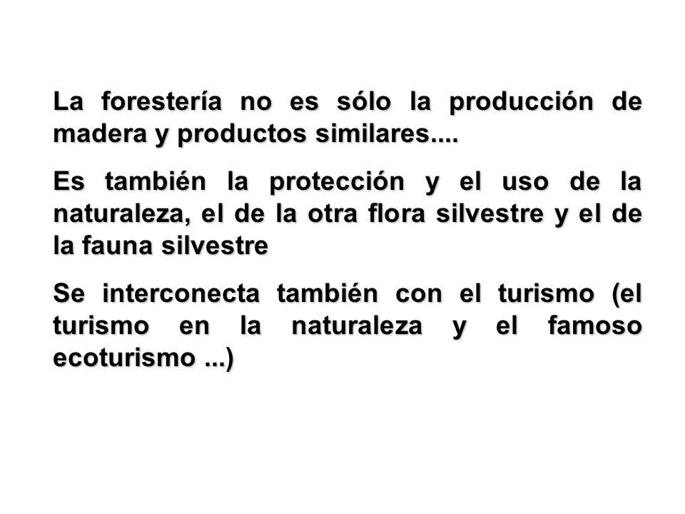 La forestería no es sólo la producción de madera y productos similares....