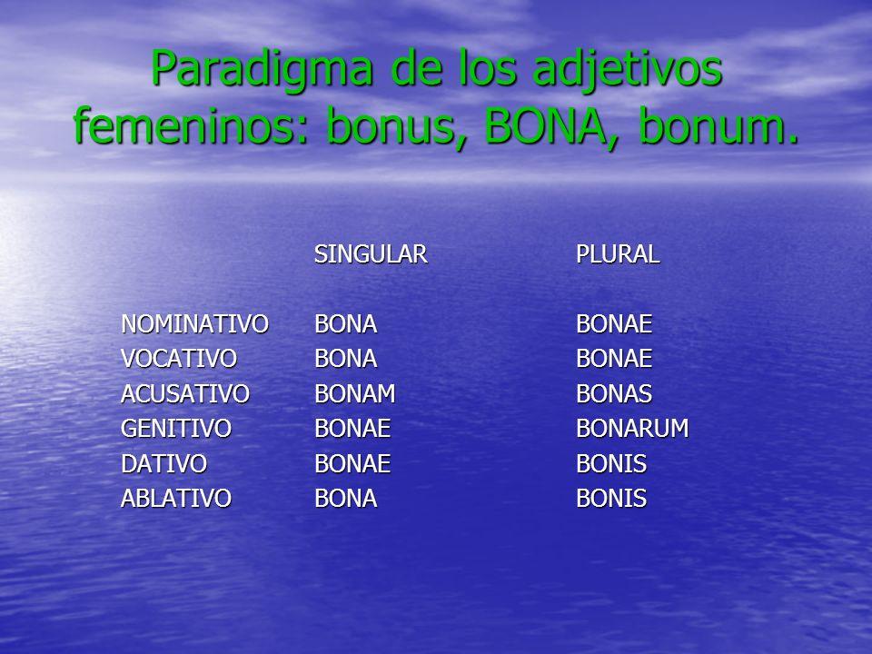 Paradigma de los adjetivos femeninos: bonus, BONA, bonum.