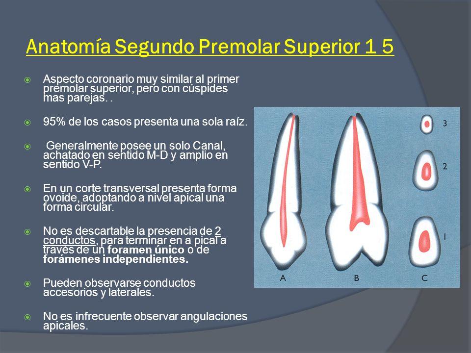 Excepcional Mandibular Segundo Premolar Anatomía Viñeta - Anatomía y ...