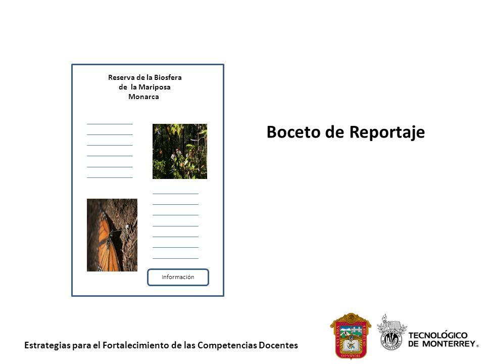 Boceto de Reportaje Reserva de la Biosfera de la Mariposa Monarca