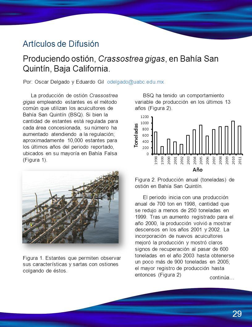 Artículos de DifusiónProduciendo ostión, Crassostrea gigas, en Bahía San Quintín, Baja California.