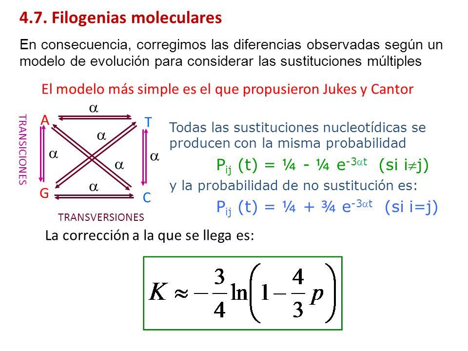 4.7. Filogenias moleculares