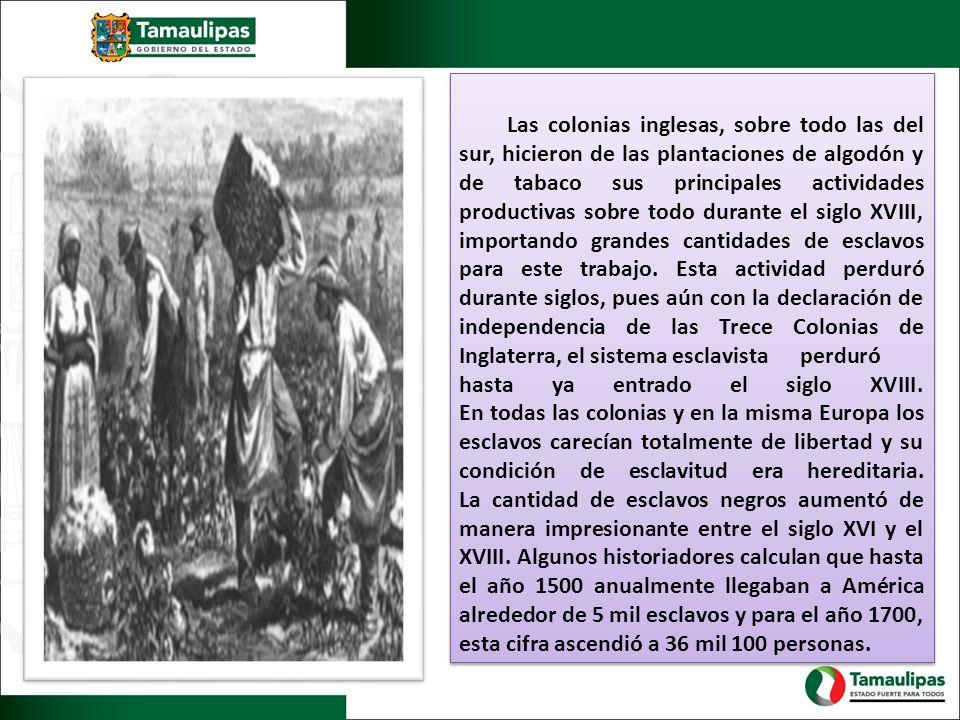 Las colonias inglesas, sobre todo las del sur, hicieron de las plantaciones de algodón y de tabaco sus principales actividades productivas sobre todo durante el siglo XVIII, importando grandes cantidades de esclavos para este trabajo.