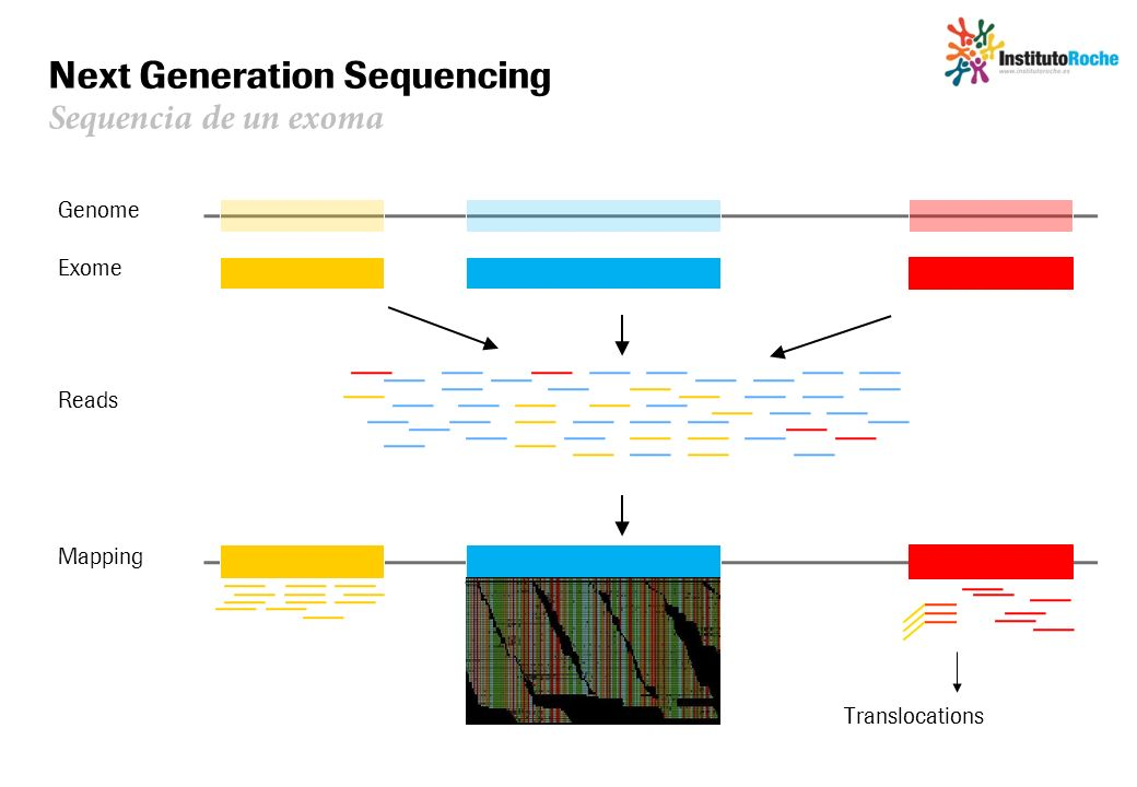 Next Generation Sequencing Sequencia de un exoma