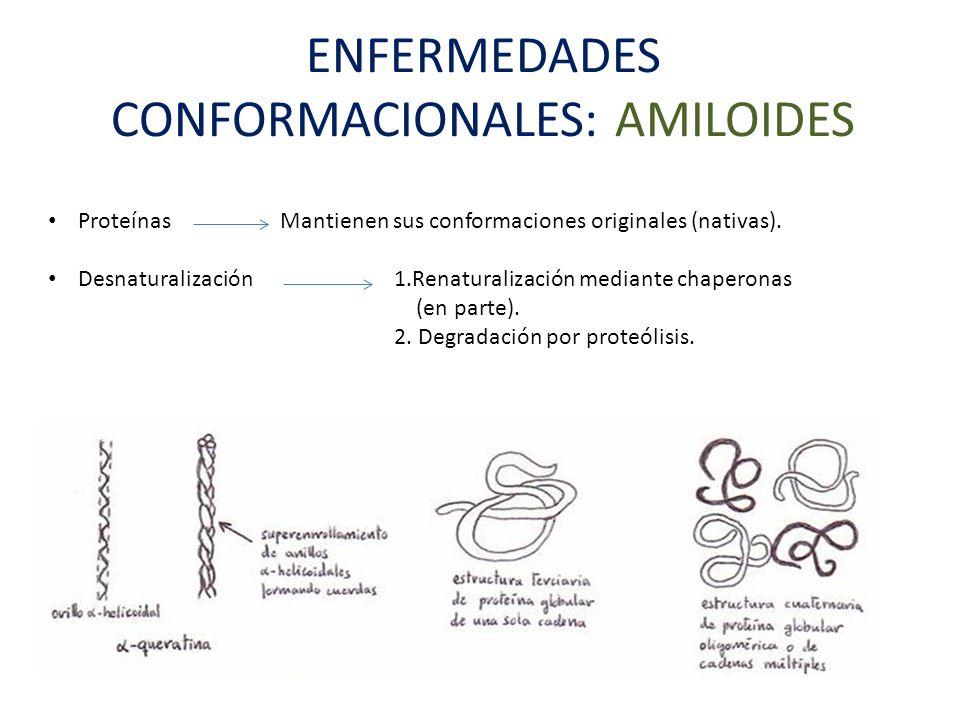 ENFERMEDADES CONFORMACIONALES: AMILOIDES