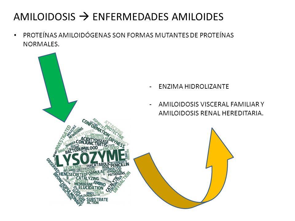 AMILOIDOSIS  ENFERMEDADES AMILOIDES