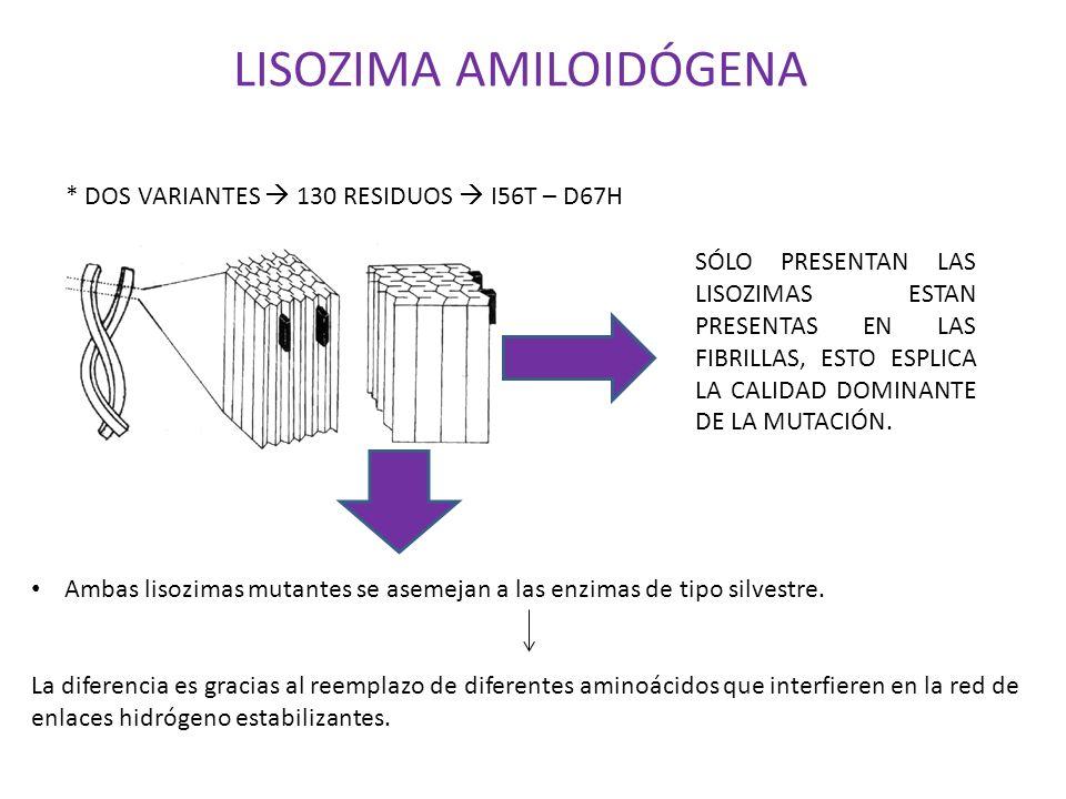LISOZIMA AMILOIDÓGENA
