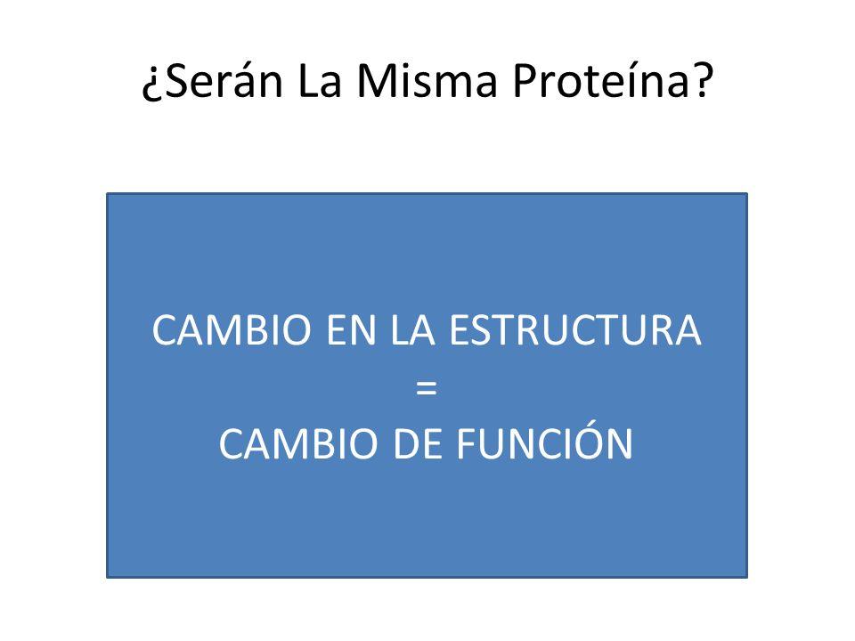 ¿Serán La Misma Proteína