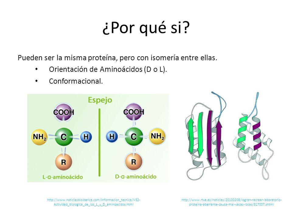 ¿Por qué si Pueden ser la misma proteína, pero con isomería entre ellas. Orientación de Aminoácidos (D o L).