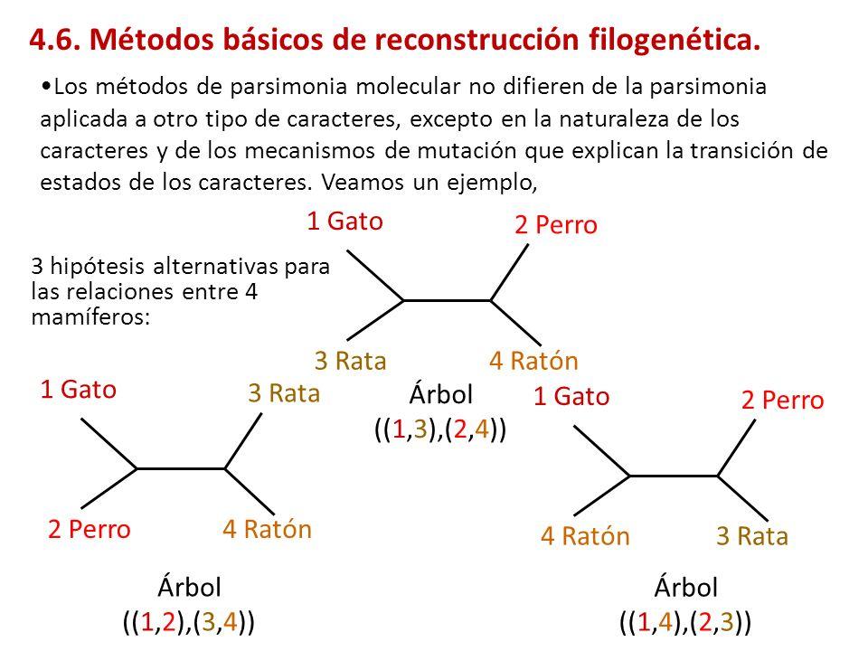 4.6. Métodos básicos de reconstrucción filogenética.