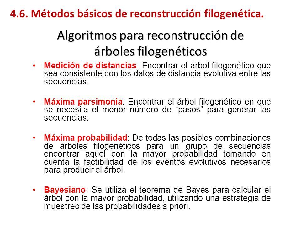 Algoritmos para reconstrucción de árboles filogenéticos