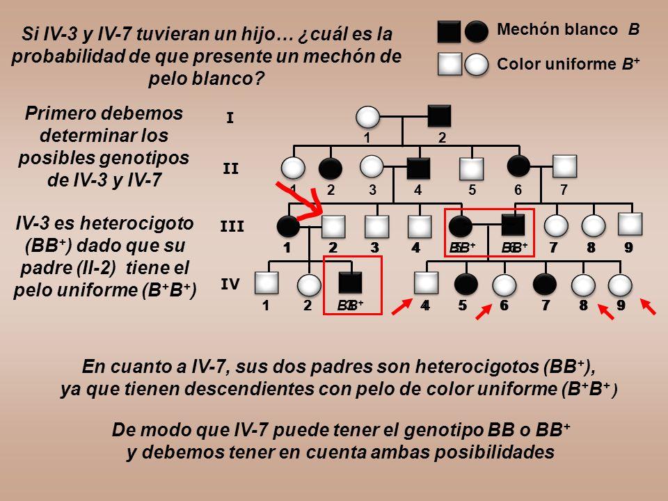 Primero debemos determinar los posibles genotipos de IV-3 y IV-7