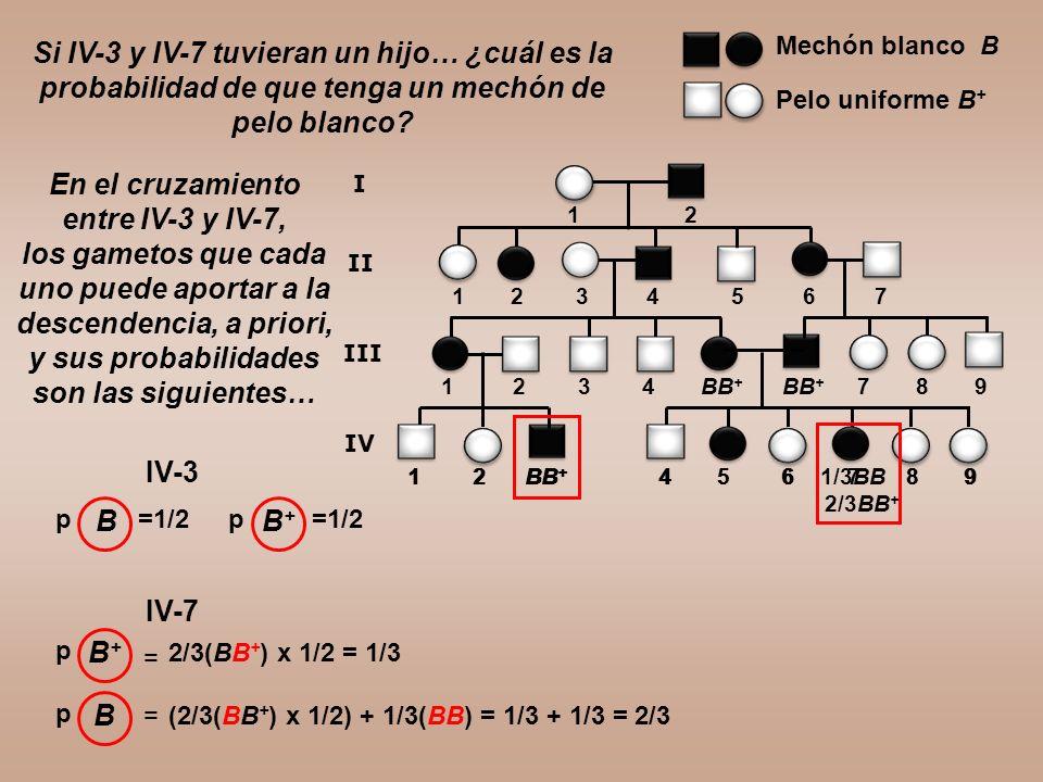 Si IV-3 y IV-7 tuvieran un hijo… ¿cuál es la probabilidad de que tenga un mechón de pelo blanco