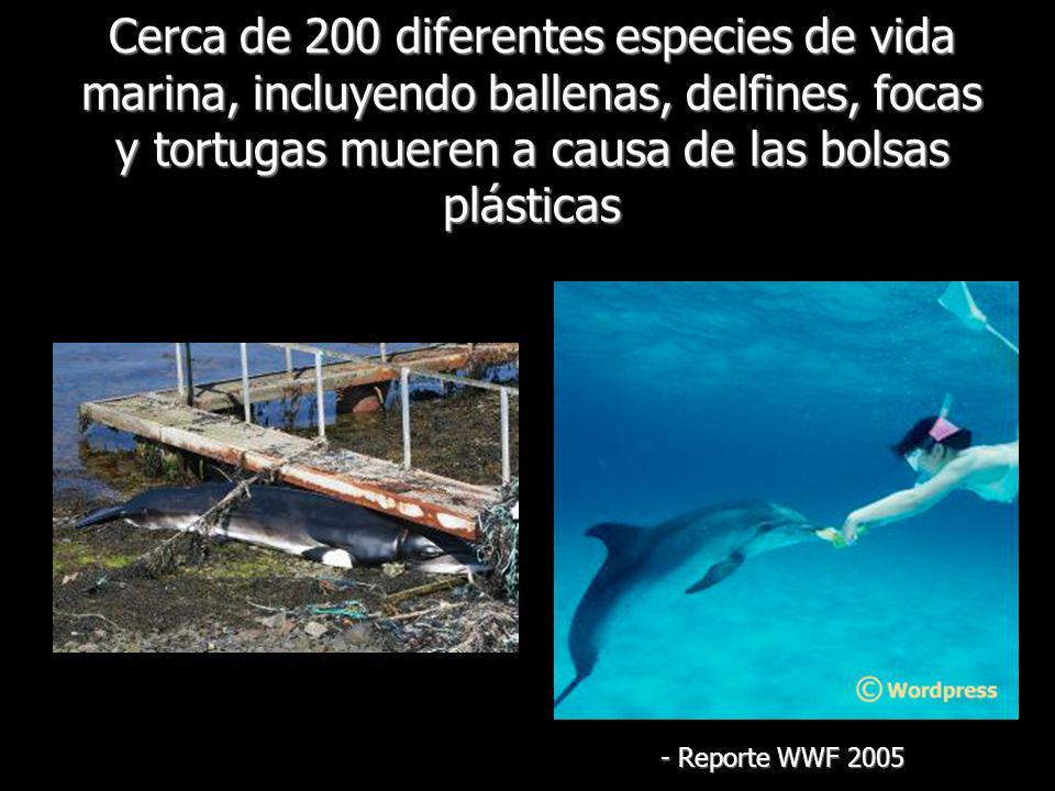 Cerca de 200 diferentes especies de vida marina, incluyendo ballenas, delfines, focas y tortugas mueren a causa de las bolsas plásticas