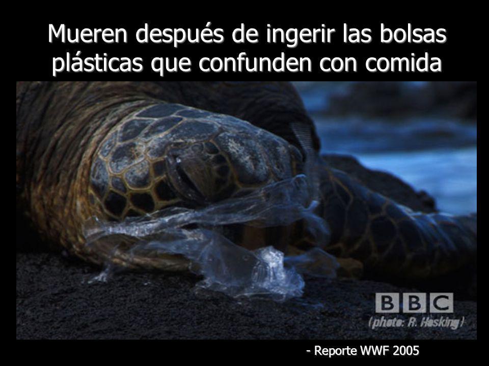 Mueren después de ingerir las bolsas plásticas que confunden con comida
