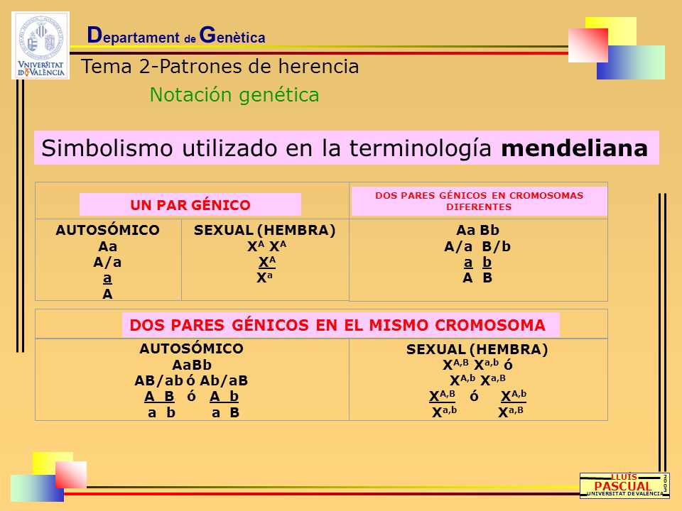 DOS PARES GÉNICOS EN CROMOSOMAS DIFERENTES