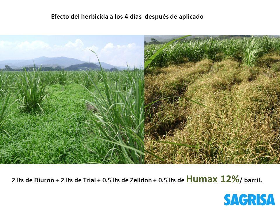 Efecto del herbicida a los 4 días después de aplicado