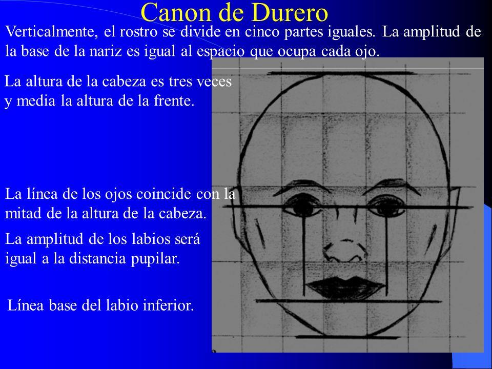 Canon de Durero Verticalmente, el rostro se divide en cinco partes iguales. La amplitud de.