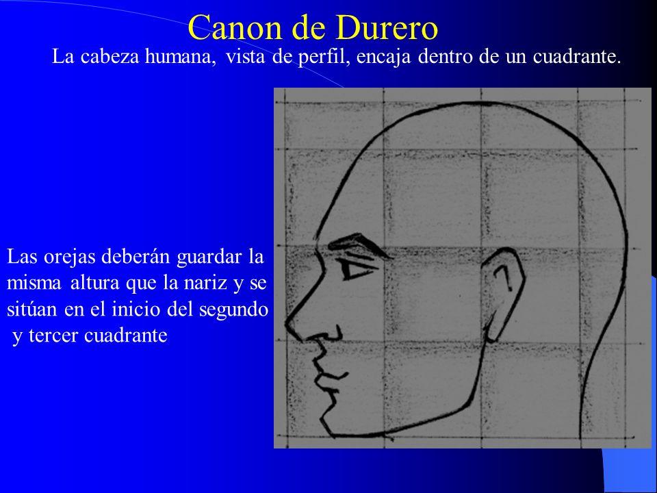 Canon de Durero La cabeza humana, vista de perfil, encaja dentro de un cuadrante. Las orejas deberán guardar la.