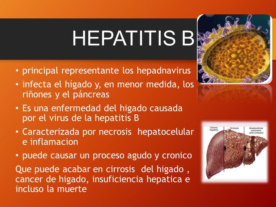 RESPUESTA INMUNE ANTE EL VIRUS DE LA HEPATITIS B - ppt