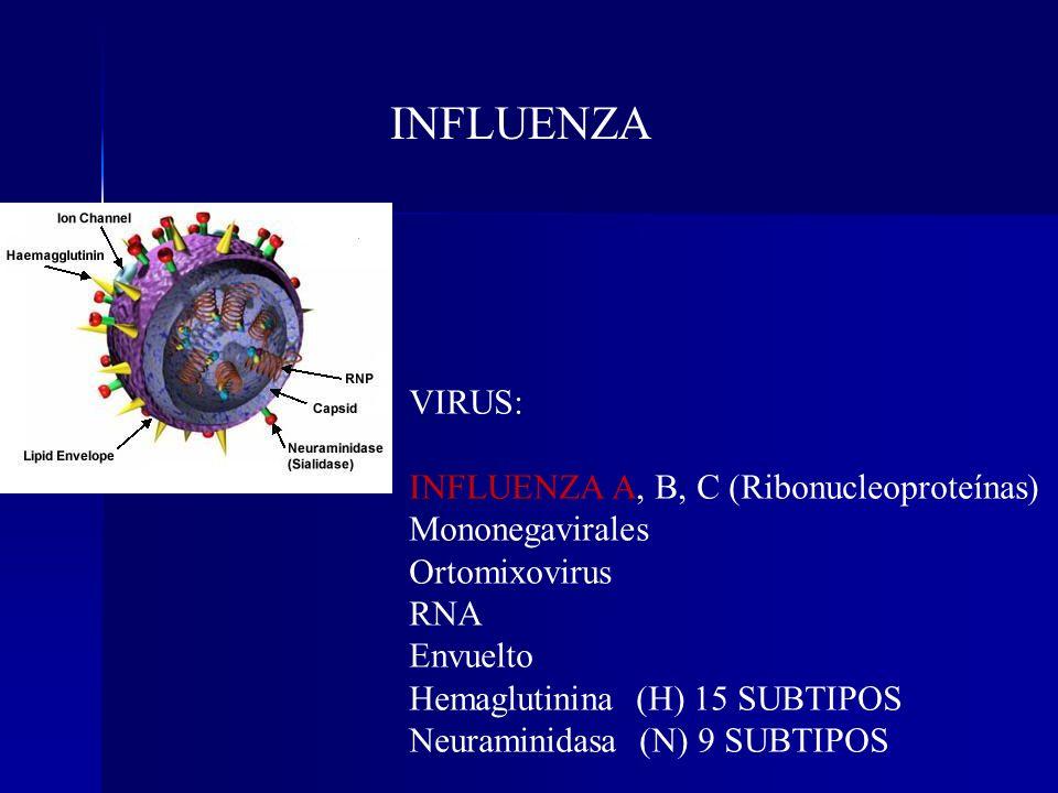 INFLUENZA VIRUS: INFLUENZA A, B, C (Ribonucleoproteínas)
