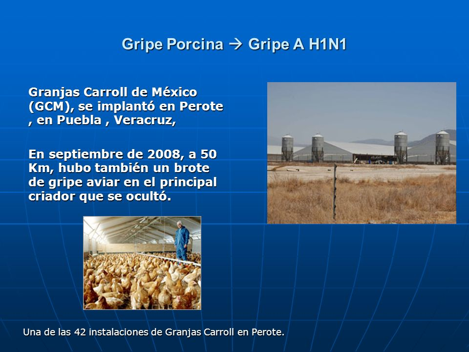 Gripe Porcina  Gripe A H1N1